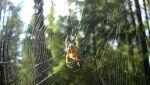 W lesie 036.jpg