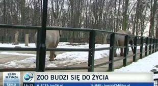 W zoo czuć już wiosnę, relacja z Krakowa Leszka Kabłaka (TVN24)