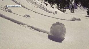 Śnieżne roladki