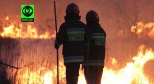 620 pożarów lasów wybuchło w kwietniu (TVN24)